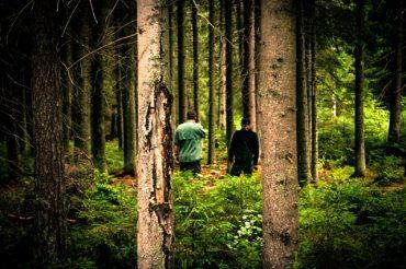 Näemmekö metsän puilta